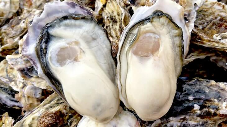 Anytime Delicious Oyster: The oyster base of Miyagi prefecture: WAGAKI.
